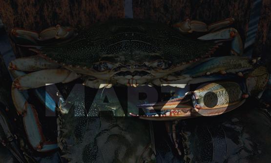 marzo-mare