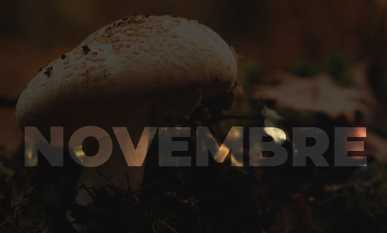 verdura-mese-novembre